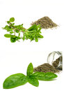 Herbs mix with dry up and fresh Royalty Free Stock Images