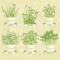 Herbs in pot garlic parsley dill sage and basil herbal vintage background Stock Photography