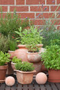 Herbs in pots garden with decorations Royalty Free Stock Photo