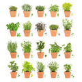 Herbs in Pots with Leaf Sprigs Royalty Free Stock Photo