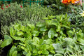 Herbs for sale at market selective focus on mint the vegetable garden with thyme in the background and sage in the foreground Royalty Free Stock Photography