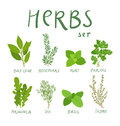 Herbs set of hand drawn vector Stock Images