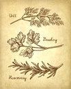 Herbs set on old paper background