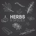 Herbs and spices on blackboard
