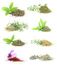 Herbs and spices collection Stock Images
