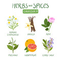 Herbs and spices collection 7 Royalty Free Stock Photo