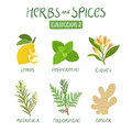 Herbs and spices collection 2