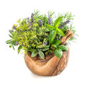 Herbs and spices dill, rosemary, basil, mint, sage, lavender. He Royalty Free Stock Photo
