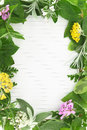 Herbs and spices frame on blank recipe card Royalty Free Stock Photo
