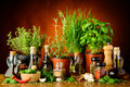 Herbs, spices and olive oil Royalty Free Stock Photo