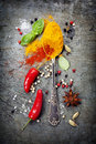 Herbs and spices selection close up Royalty Free Stock Photography