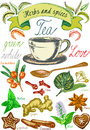 Herbs and spices, tea set, Tea leaves for tea preparation, vintage vector graphic with herbs