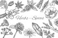 Herbs and Spices vector template. Frame in sketch style. Hand drawn