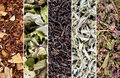 Herbs and tea collection Stock Image