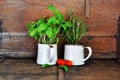 Herbs and tomatoes in rustic kitchen Royalty Free Stock Image