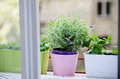 Herbs on the window oregano mint and levander Stock Photo