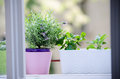 Herbs on the window oregano mint and levander Stock Images