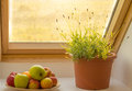 Herbs on window sill and apples Royalty Free Stock Photo