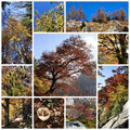 Herbstfarben - Collage Stockfoto
