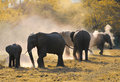 Herd of african elephants dust and mistyc light Royalty Free Stock Photos