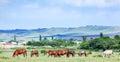 Herd of arabian horses at pasture Royalty Free Stock Photo