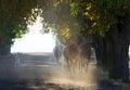 Herd of arabian horses on the village misty road Royalty Free Stock Photo