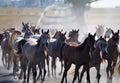 Herd of arabian horses on the village road Royalty Free Stock Photo