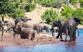 Herd of elephants Stock Photo