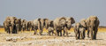 Herd of elephants in the Etosha National Park Stock Photo