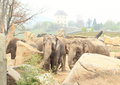 Herd of elephants grey india with house behind Royalty Free Stock Photography