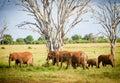 Herd of elephants in tsavo east Stock Images