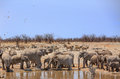 A herd of Elephants and zebras next to a waterhole Royalty Free Stock Photo