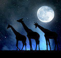 Herd of giraffes in the night sky with moon Stock Images