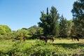 Herd of grazing donkeys donkey on a meadow in rural landscape Stock Photo
