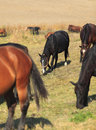 Herd of horse Stock Photography