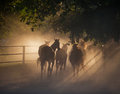Herd of horses back on the dusty village road Royalty Free Stock Photo