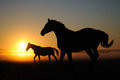 A herd of horses at dawnpony dawn come in landscape sunrise silhouette Royalty Free Stock Images