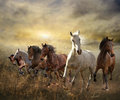 Herd of horses galloping free at sunset collage on background Stock Photos
