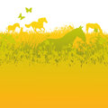 Herd of horses on green pasture Royalty Free Stock Photo