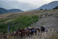 A herd of horses on a high mountain pasture Royalty Free Stock Photo
