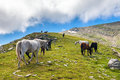 Herd of horses in the mountain Royalty Free Stock Photo