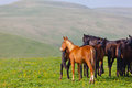 Herd of horses on a summer green pasture Royalty Free Stock Photos