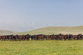 Herd of horses on a summer pasture. Royalty Free Stock Photo