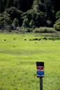 Herd of roosevelt elk cows with no trespass sign in a meadow feeding a Royalty Free Stock Image