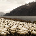 Herd Sheep nScenic View Lake Mountain Concept Royalty Free Stock Photo