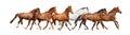 Stádo z divoký kone beh voľný na bielom