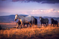 A herd of wild horses walk on the mountain Royalty Free Stock Photo