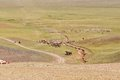 Herds of sheep migrate in Mongolia Royalty Free Stock Photo