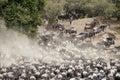 Herds of Wildebeest in Great Migration, Kenya