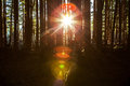 Here comes the sun giant colorful sunburst lens flare through trees in a dense forest Royalty Free Stock Photography